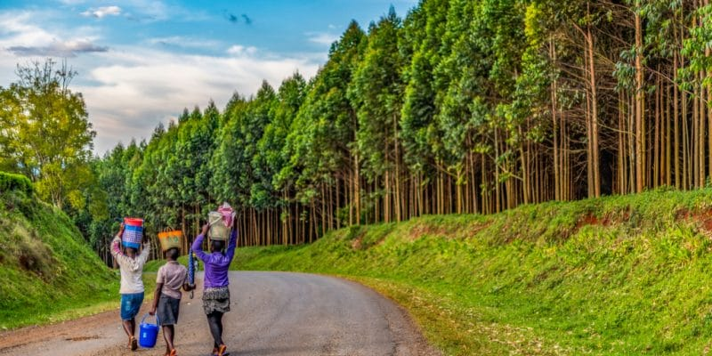 KENYA : Komaza lève 28 M$ pour développer ses plantations forestières©Jen Watson/Shutterstock