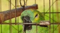 MAROC : démantèlement d'un réseau de 28 trafiquants d'oiseaux sauvages©Marcos Cesar Campis/Shutterstock