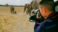 AFRICA: More than 70 photographers raise funds for wildlife ©huang jenhung/Shutterstock