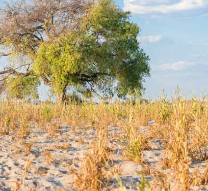 CHAD: $5.3 million from GEF for climate change resilience ©Johannes Laufs/Shutterstock