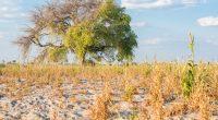 TCHAD : 5,3 millions de dollars du FEM pour la résilience au changement climatique©Johannes Laufs/Shutterstock