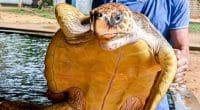 TUNISIE : Monastir adopte une sanction contre le trafic illégal des tortues marines©ValeriiaES/Shutterstock