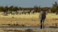 AFRIQUE : Berlin va allouer 15 M$ à la protection de la biodiversité©Toni Aules/Shutterstock