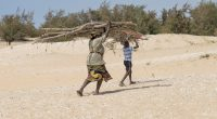 MALI: NGOs sound alarm at 82 per cent forest loss©DiversityStudio/Shutterstock