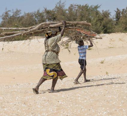 MALI: NGOs sound alarm at 82 per cent forest loss©DiversityStudio/Shutterstock