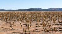 ANGOLA: IFAD, AFD and BADEA contribute more than $111.8 million to climate resilience©Wildeside/Shutterstock