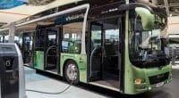 SEYCHELLES : vers l'utilisation des bus électriques dans le transport public ©VanderWolf Images/Shutterstock