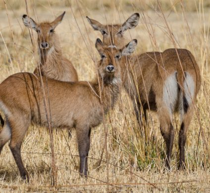 BENIN: African Parks takes over Beninese part of the W National Park©/Shutterstock