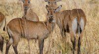 BÉNIN : African Parks obtient la gestion de la partie béninoise du parc national du W©Fabian Plock/Shutterstock