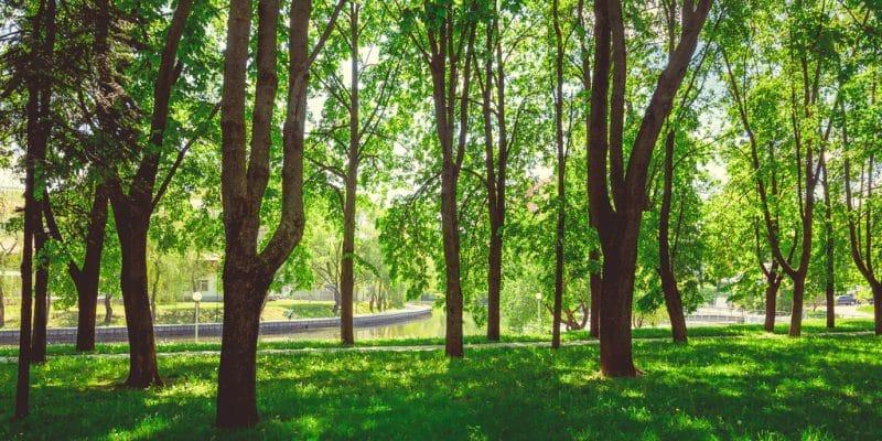 SÉNÉGAL : un parc forestier de 10 hectares sera aménagé à Dakar©Peryn22/Shutterstock