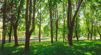 SENEGAL: 10-hectare forest park to be set up in Dakar©Peryn22/Shutterstock