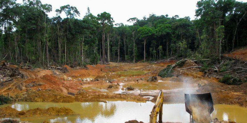 CAMEROUN : Greenpeace dénonce le financement accordé au projet agroindustriel Sudcam©kakteen/Shutterstock