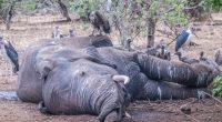 BOTSWANA : l'enquête sur la mort mystérieuse de plus de 350 éléphants piétine ©senee sriyota / Shutterstock