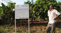 COTE D'IVOIRE : le FVC alloue 11 M$ à un projet d'agro écologie autour du cacao©DR
