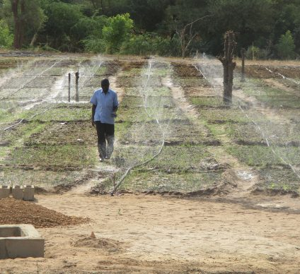 NIGER: Startup company launches solar-powered remote irrigation system©Tech-Innov