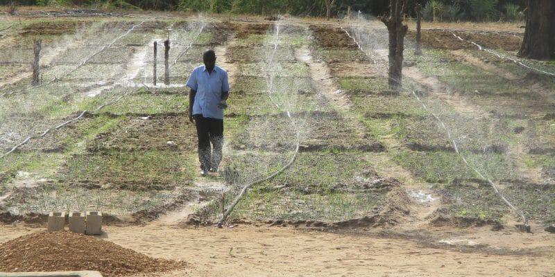 NIGER : un start-uppeur lance un système d'irrigation à distance alimenté au solaire ©Tech-Innov