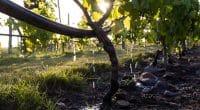 BÉNIN : évolution satisfaisante pour le projet de résilience climatique PMSD©Nolte Lourens/Shutterstock