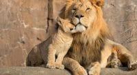AFRIQUE : cinq pays s'allient pour lutter contre le braconnage d'espèces sauvages©Ricardo Reitmeyer/Shutterstock