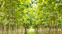 CÔTE D'IVOIRE : le gouvernement lance l'opération «1 jour, 5 millions d'arbres» ©PhilipYb Studio/Shutterstock