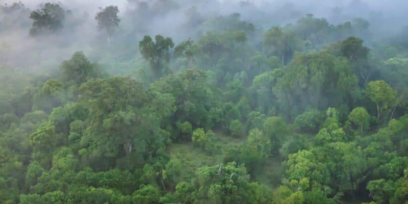 KENYA: Government rehabilitates Maasai Mau Forest and plants 1.4 million trees ©CherylRamalho/Shutterstock