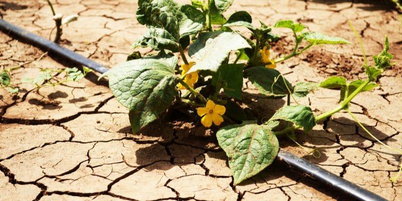 TOGO : l'État va distribuer 15000 kits d'irrigation aux agriculteurs ©Adriana Mahdalova/Shutterstock