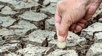 AFRIQUE : la BAD accroit les financements en faveur du climat©Edgar G Biehle/Shutterstock