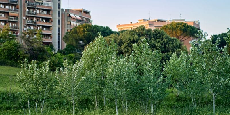 SENEGAL: Real estate projects shall be subject to an obligation to plant trees.©Daniele COSSU/Shutterstock
