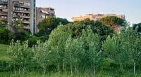 SÉNÉGAL : les projets immobiliers seront soumis à l'obligation de planter des arbres©Daniele COSSU/Shutterstock