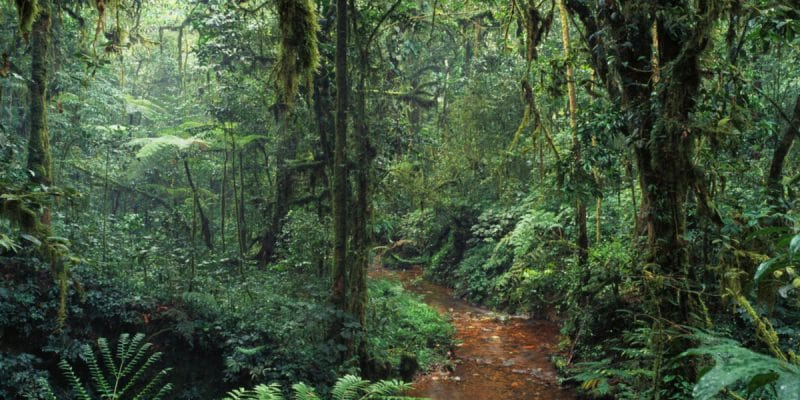 CAMEROON: Ebo rainforest logging project cancelled©Ivanov Gleb/Shutterstock