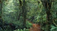 CAMEROUN : le projet d'exploitation de la forêt vierge d'Ebo est annulé©Ivanov Gleb/Shutterstock