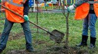 SEYCHELLES : la Trass va planter 100000 arbres à Praslin d'ici décembre 2020©Shcherbakov Ilya/Shutterstock