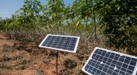 AFRICA: AFSIA webinar on solar energy use in agriculture©EAKNARIN JITONG/Shutterstock