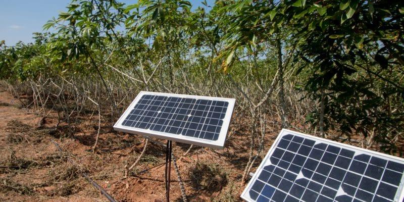 AFRIQUE : un webinaire de l'Afsia sur l'application du solaire dans l'agriculture©EAKNARIN JITONG/Shutterstock