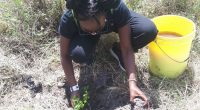 KENYA : appel à participation à la plantation de 10000 arbres dans le parc de Nairobi©Skippy Adventures Tours & Events