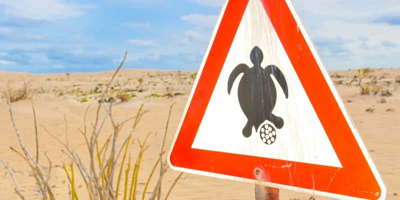 CAPE VERDE: Record results in the conservation of sea turtles in Praia©Lucian Milasan/Shutterstock