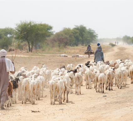 NIGER: €4 M from ADF for drought risk management ©mbrand85/Shutterstock