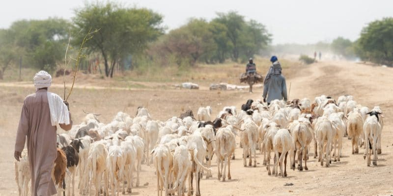 NIGER : 4 M€ de la FAD pour la gestion des risques liés à la sécheresse©mbrand85/Shutterstock