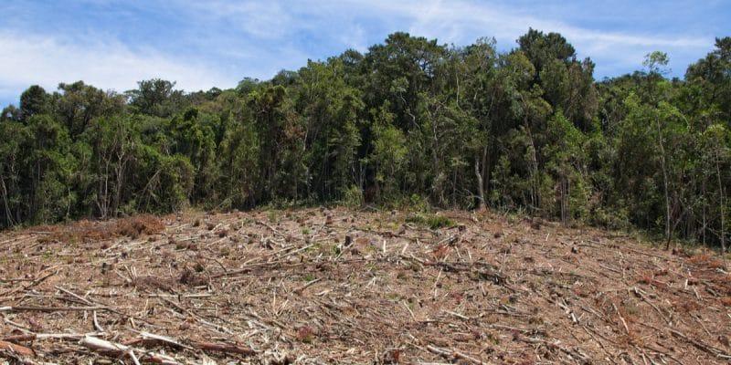 CAMEROUN : Greenpeace s'appose au du projet de palmeraie Camvert au sud du pays©MD_Photography/Shutterstock