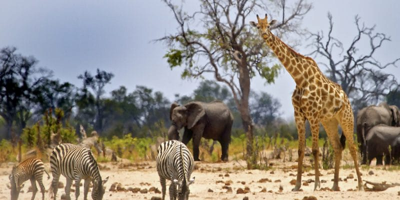 ZIMBABWE: Hwange Park threatened by Jingan Corporation's coal extraction©paula french/Shutterstock
