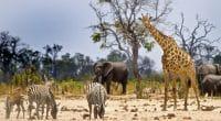 ZIMBABWE : le parc de Hwange menacé par l'extraction du charbon de Jingan Corporation©paula french/Shutterstock