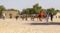 AFRIQUE : le bureau régional du GCA est ouvert pour l'adaptation au changement climatique ©Torsten Pursche/Shutterstock