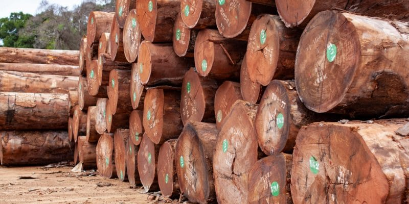 GABON: TraCer Project Ensures Sustainable Wood Management in the Nkok SEZ©Ayotography/Shutterstock