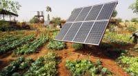 SÉNÉGAL : l'UE soutient l'entrepreneuriat féminin à travers les énergies renouvelables©Malevic/Shutterstock