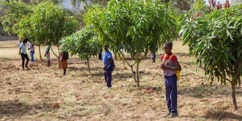 TOGO: A 10-hectare reforestation operation launched in the south of the country©ivanfolio/Shutterstock