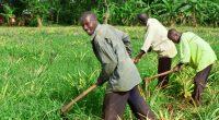 AFRIQUE : la FMO alimente de 10 M€ le fonds eco.business pour la biodiversité ©Travel Stock/Shutterstock