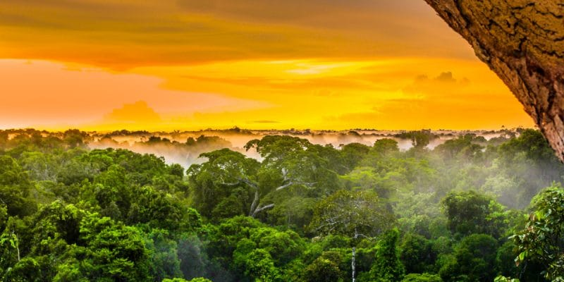 SENEGAL: New forests will be classified, the first since 1968©streetflash/Shutterstock