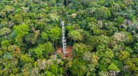 DRC: a tower to measure the impact of tropical forests on climate change© Cifor