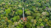 RDC : une tour pour mesurer l'impact des forêts tropicales sur le changement climatique©Cifor