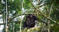 RWANDA: African Parks obtient la gestion déléguée du parc national de Nyungwe©Cristi Popescu/Shutterstock