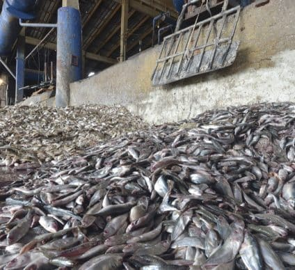 WEST AFRICA: Factory ships accused of plundering fisheries resources©think4photop/Shutterstock